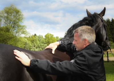 Alternative Heilmethoden Pferd